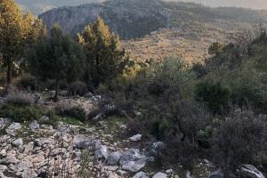 Hacı Yusufun Yemen Hatırası